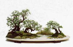 L'Art du Penjing, ves petits paysages de bonsais.  Art of Penjing, small bonsai landscapes.