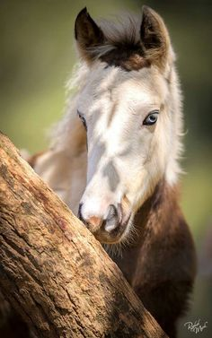 Blue eyed baby horse with unusual markings