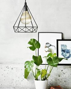 Endelig er denne nydelige takpendelen fra @nordluxdenmark i vår nettbutikk!  Sjekk link i bio. w w w . L I G H T U P . n o for alle våre nyheter #lightupno #belysning #bright #light #raw #interior #creativity #lamps #home #living #lifestyle #design #nordlux #interior123 #nordiskehjem #nordiskdesign #interiørmagasinet #interiorinspirasjon #interior4all