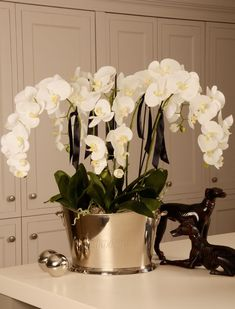 Are orchids Indoor Plants . are orchids Indoor Plants . orchids In A Shell Diy Arrangements Ikebana, Orchid Flower Arrangements, Artificial Floral Arrangements, Orchid Centerpieces, Artificial Silk Flowers, Artificial Plants, Fake Plants, Indoor Orchids, Orchid Plants