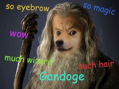 even in lotr shibe finds me