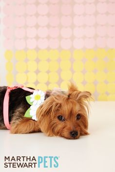 Sit back, relax, and finally enjoy the spring weather! #MarthaStewartPets available @PetSmart.