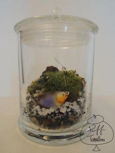 Fishin' a Big One #puff #terrariums #terrarium #home #work #business #decor #decoration #plant #cactus #garden #mini #minitureworld #wedding #centerpiece #weddingfavors #moss #reindeermoss #mason #ball #mushroom #apartmenttherapy #christmas #gift #DIY #crafts #fish #fishing #fisherman