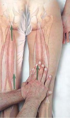 Hamstring massage for stretch and relief, strip upward Body Therapy, Massage Therapy, Physical Therapy, Massage Tips, Reflexology Massage, Sports Massage, Bone And Joint, Muscle Body, Anatomy And Physiology