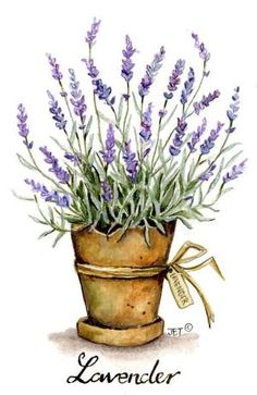 home decor watercolor lavender in can - Yahoo Image Search Results Watercolor Cards, Watercolour Painting, Watercolor Flowers, Painting & Drawing, Watercolours, Watercolor Illustration, Lavender Flowers, Lavander, Lavender Plants