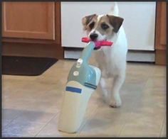 furry-cleaning assistant (better than a Roomba!)