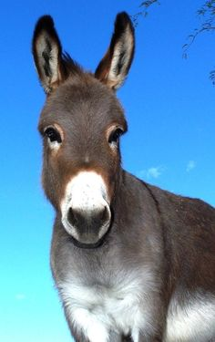 Beautiful Donkey