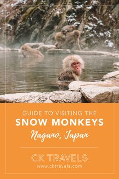 A guide to visiting the snow monkeys in Nagano, Japan