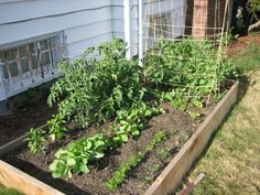 74 Best Vegetable Garden Images Vegetable Garden Potager Garden