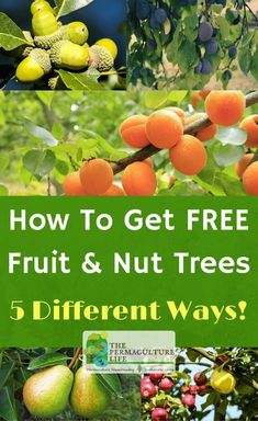 Ok, so who doesn't like free? I sure do, and free plants is even better!So in that spirit, I put together several different ways you can get free or cheap fruit and nut trees (and bushes).