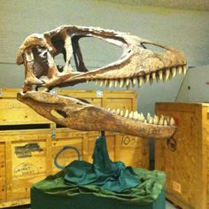 Sternberg Museum of Natural History, Hays, Kansas