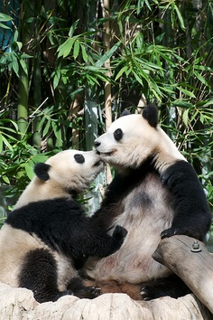 Zhen Zhen gives Momma Bai Yun a kiss by Rita Petita