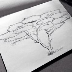 acacia tree coloring page - african tree pattern use the printable outline for crafts
