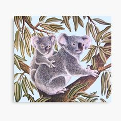 High quality Koala gifts and merchandise. Sloth Sleeping, Baby Koala, Australian Animals, Wombat, Animal Crossing, Wildlife, Kawaii, Cartoon, Illustration
