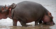 I like big butts, I cannot lie...