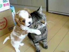 Free hug between puppy and kitten  www.kittinspiration.com