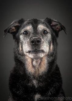 Galeria Tocante: Cachorros De Idade