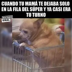 Nothing is more scary than that Funny Spanish Memes, Spanish Humor, Mexican Memes, Avakin Life, Little Memes, Clean Memes, Top Memes, Funny Puns, Funny Animals