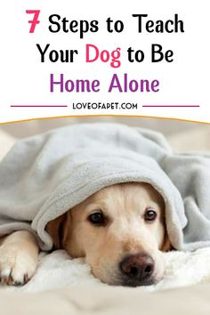 How To Teach Your Dog To Be Home Alone: With training, your dog can learn to enjoy being home alone without making any disturbances and become a delightful companion- instead of being a nuisance. Best Puppies, Best Dogs, Easiest Dogs To Train, Mastiff Dogs, Home Alone, Dog Agility, Outdoor Dog, How To Train Your, Dog Behavior