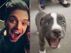Omg too cute!!!! Sebby and a cute pitbull x3