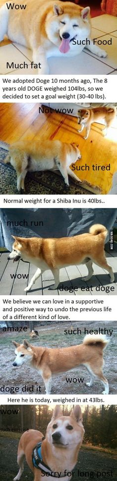 Doge Journey to Fitness!