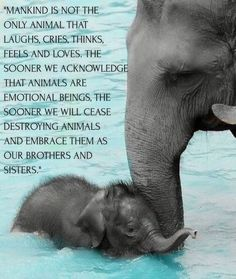 Mankind is not the only animal that laughs, cries, thinks, feels & loves. The sooner we acknowledge that animals are emotional beings, the sooner we will cease destroying animals & embrace them as our brothers & sisters Elephant Quotes, Elephant Facts, Elephant Love, Baby Elephants, Cute Baby Animals, Animals And Pets, Funny Animals, Animal Facts, Animal Quotes