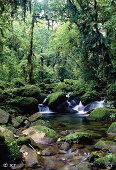 Top Costa Rica Backpacker Destinations: Santa Elena & Monteverde
