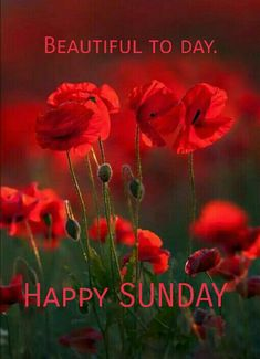 Happy sunday. Good Morning Happy Sunday, Blessed Sunday, Good Morning Quotes, Red Flowers, Red Roses, Coaching, Days Of Week, Good Morning Flowers, Roses
