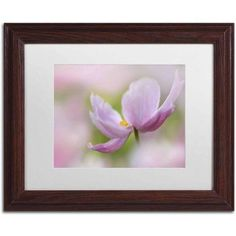 Trademark Fine Art 'Pink Anemone' Canvas Art by Cora Niele, White Matte, Wood Frame, Size: 16 x 20, Multicolor