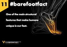 #barefootfact 11  28 bones, 19 ligaments and 200,000 nerve endings; one of the main structural features that make humans unique is our feet.