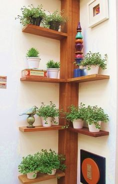 Inside planters on pinterest whiskey bottle corner shelves and plant stands - Corner shelf for plants ...