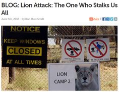 Lion Attack: The One Who Stalks Us All