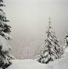 {dreams under a snow sky}        would be stunning with snow glitter for cards