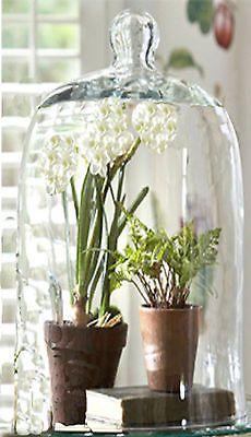 """15"""" TALL Glass DISPLAY BELL Jar DOME~ Terrarium~Plant~Taxidermy~Knob~Cloche~Cake"""