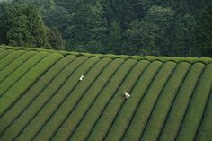 The Mourning Forest, Naomi Kawase (2007)