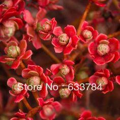 aeonium arboreum tohumu - Google'da Ara