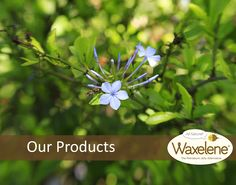 The Waxelene product line.
