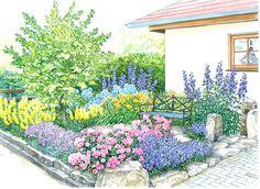farbenprächtiger sichtschutz | 3(, lambs ear and blooms