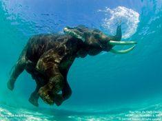 Snorkeling - Schnorcheln...