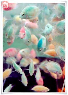 Foto del día: Peces de colores