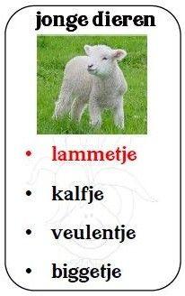 lente kwartet Dutch Words, Scrabble, Teacher, Projects, Kids, Animals, Log Projects, Young Children, Professor