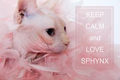 45 Best LOL Sphynx images in 2017 | Sphynx cat, Cats, Cool cats