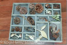 Nature box and Winter nature study Outdoor Activities For Kids, Science For Kids, Science Nature, Nature Activities, Science Ideas, Winter Fun, Winter Theme, Winter Hiking, Godly Play