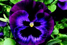 Lists of Annuals Flower | These were some of the varieties of summer flowers which I recommend ...