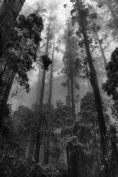winter forest revisited - Photography, Landscape photography, Photography tips Black And White Photo Wall, Black And White Pictures, Black White, Tree Forest, Dark Forest, Magical Forest, Foggy Forest, Forest View, Dark Photography