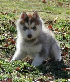 I want this puppy!!!