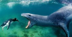 Watch What Happens As Photographer Comes Face-to-Face with Deadly Leopard Seal