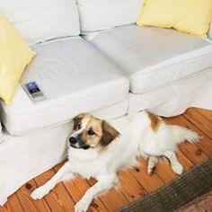 ScatMat Pet Training Strip | Remote Training | PetSmart
