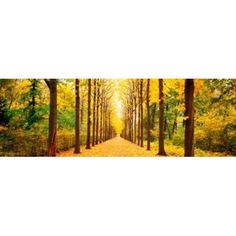 Tree-lined road Schwetzingen Germany Canvas Art - Panoramic Images (36 x 12)