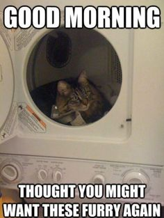 Thoughtful cat meme lol humor funny pictures funny photos funny